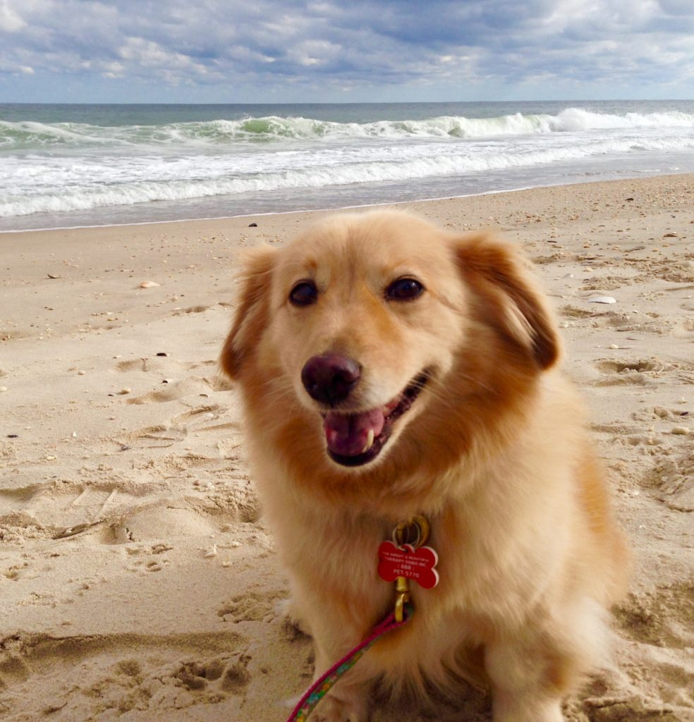 Maya on the beach - https://www.lifeisbetterwithtea.com