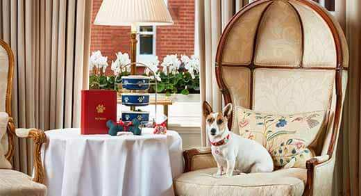 doggy best afternoon tea in London
